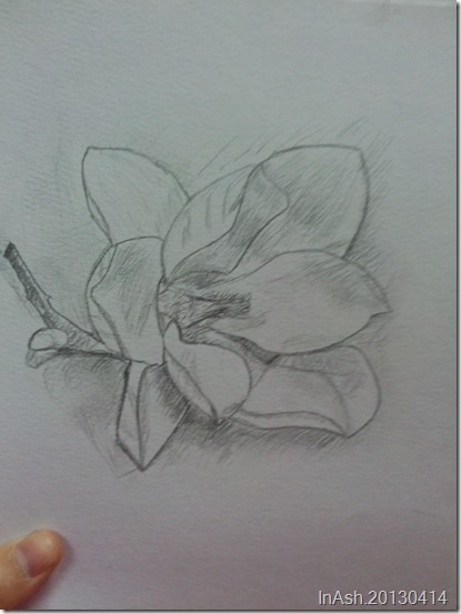 素描了一朵玉兰花