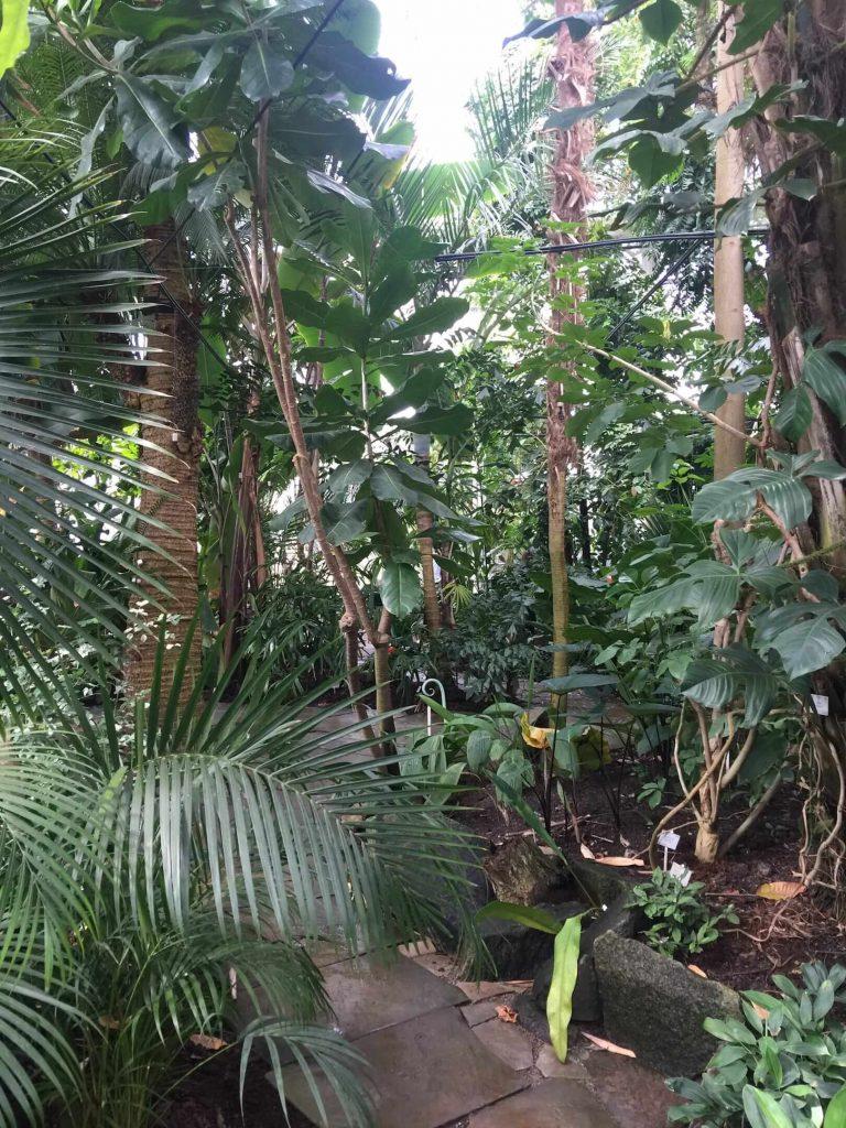 哥本哈根热带植物馆
